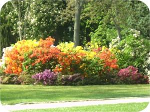 Lo splendore di colori vivificante è stato scelto dal giardiniere in modo arominco