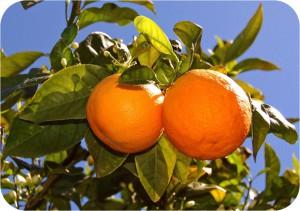 L'arancia diffonde la luce verso l'esterno *